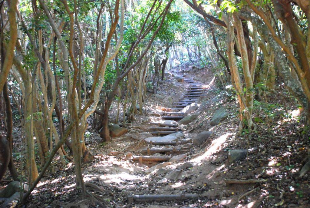 芥屋の大門 遊歩道 トトロのトンネル