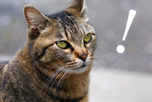 驚き、びっくり、猫