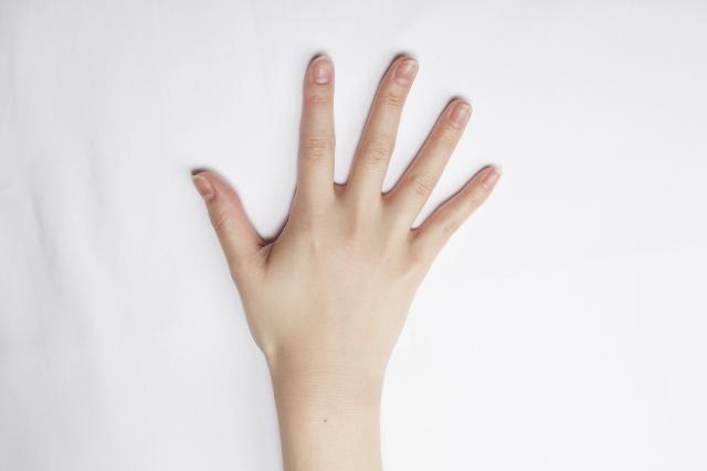 手指、手のひら、
