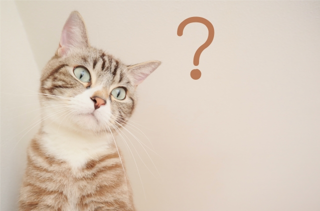 猫、疑問、はてな、何故、どうして、猫